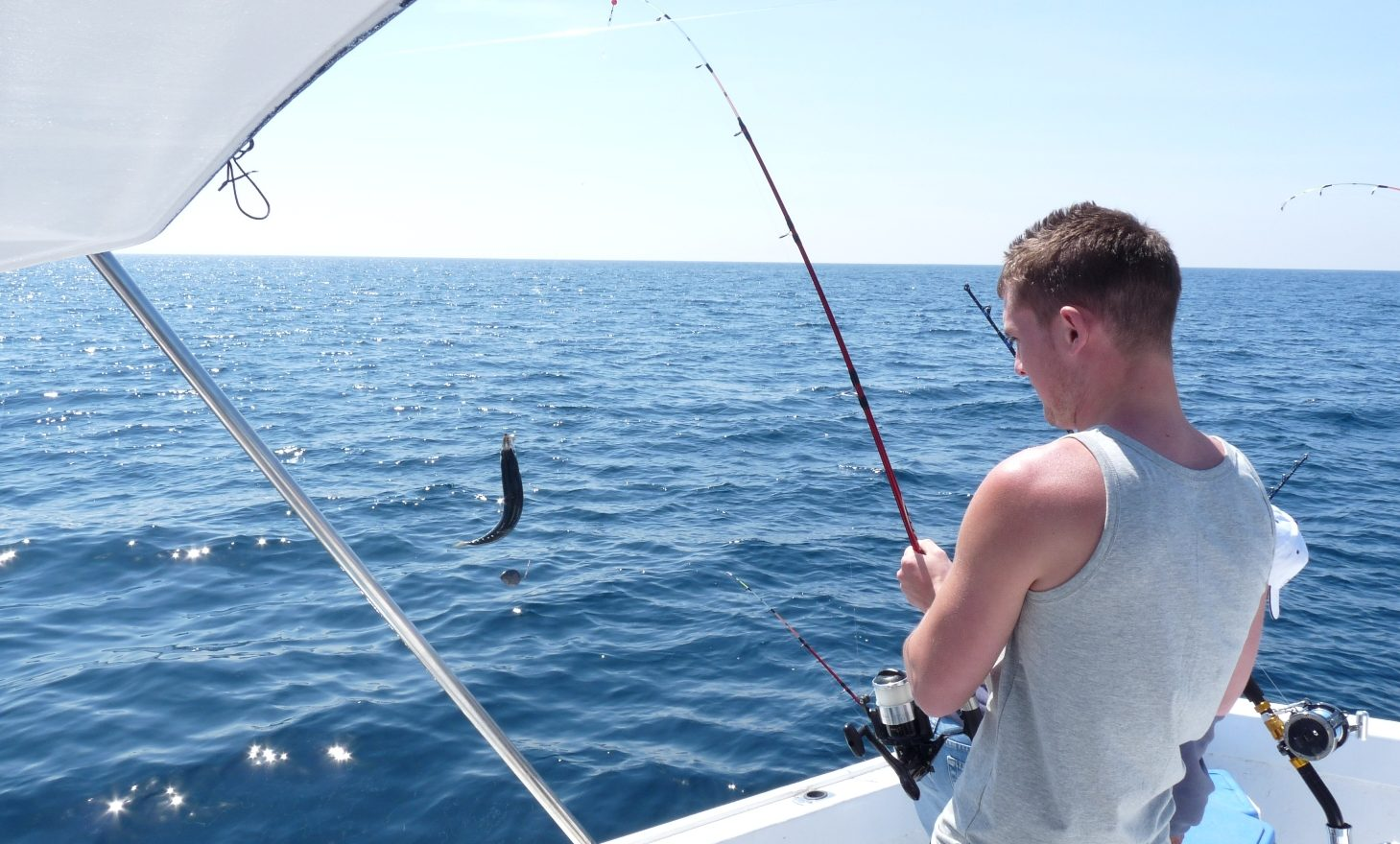 reef fishing big groups