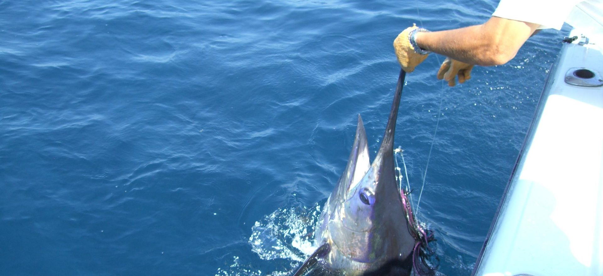 Albufeira marlin fishing trips